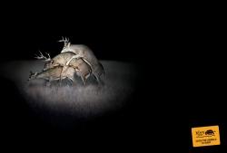 http://www.bestadsontv.com/files/print/2006-Apr/tn_2274_Deer.jpg
