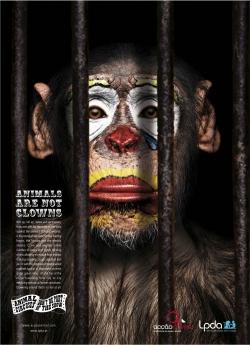 http://www.bestadsontv.com/files/print/2007/Dec/tn_10525_chimp.jpg
