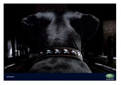 http://www.bestadsontv.com/files/print/2008/Mar/tn_12715_DogCollar1.jpg