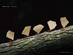 http://bestadsontv.com/files/print/2009/Jan/tn_19128_Neenah_Paper_-_Leaf_Cutter_Ants.jpg