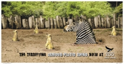 http://www.bestadsontv.com/files/print/2009/Jan/tn_19191_zebra.jpg