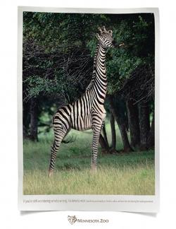 http://www.bestadsontv.com/files/print/2009/Sep/tn_24430_Africa_zebragiraffe72.jpg