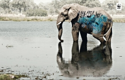 http://www.bestadsontv.com/files/print/2010/Jun/tn_30044_WWF_biodiversity-elephant.jpg