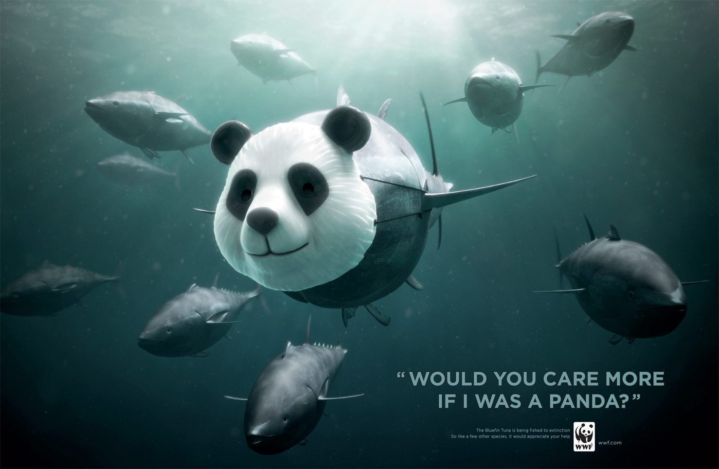 world wildlife fund ad Create an account or sign in for a tailor-made video experience sign up / sign in what to watch.
