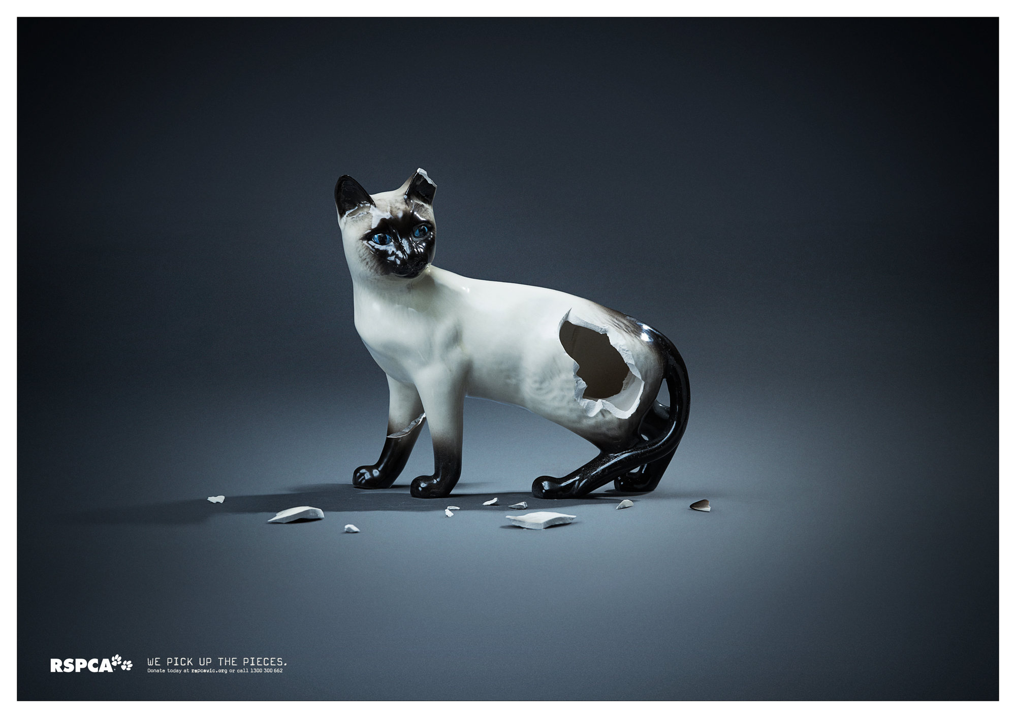 Print Ad Rspca Victoria We Pick Up The Pieces Cat