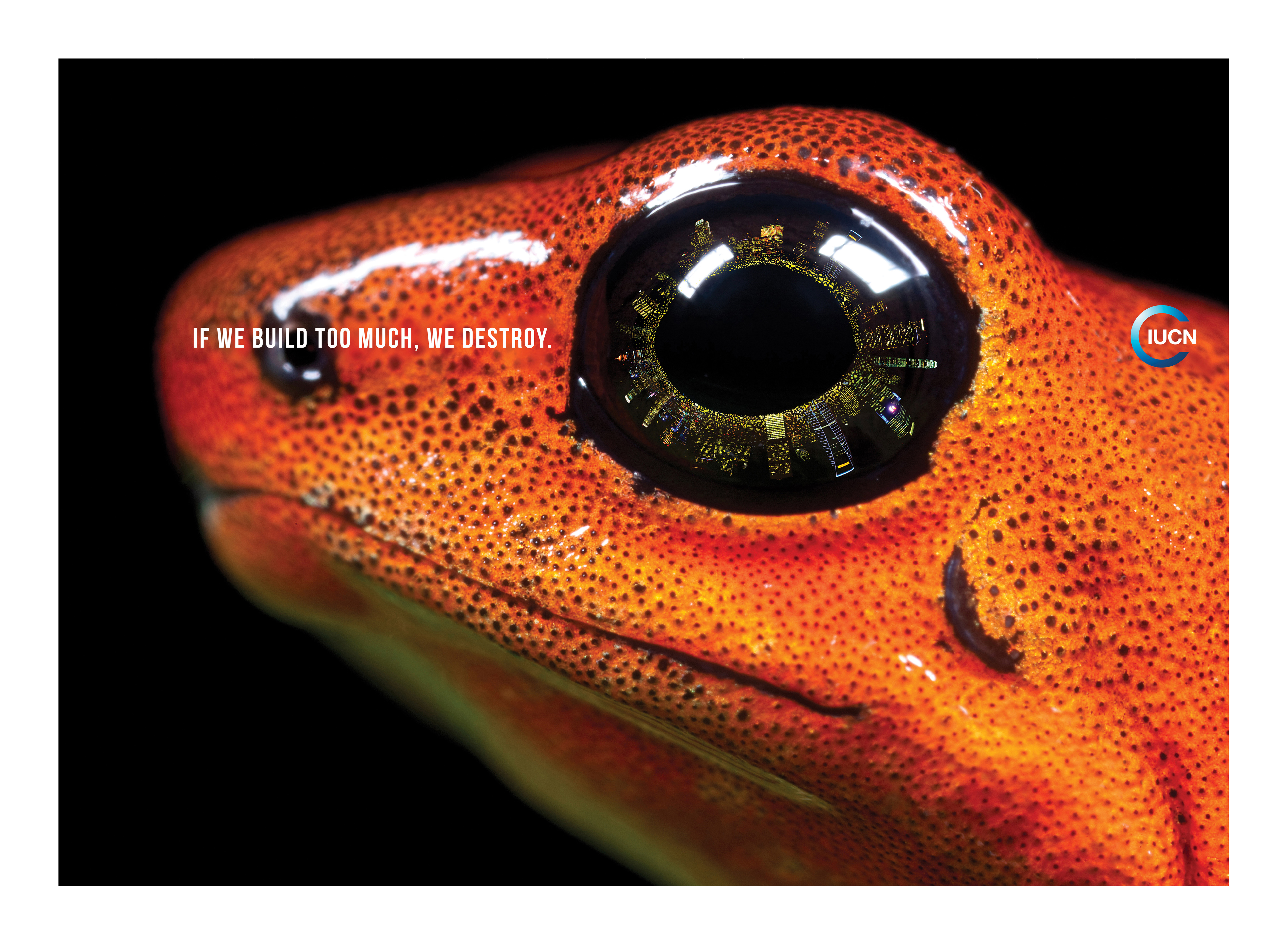 Print ad iucn frog for Frog agency