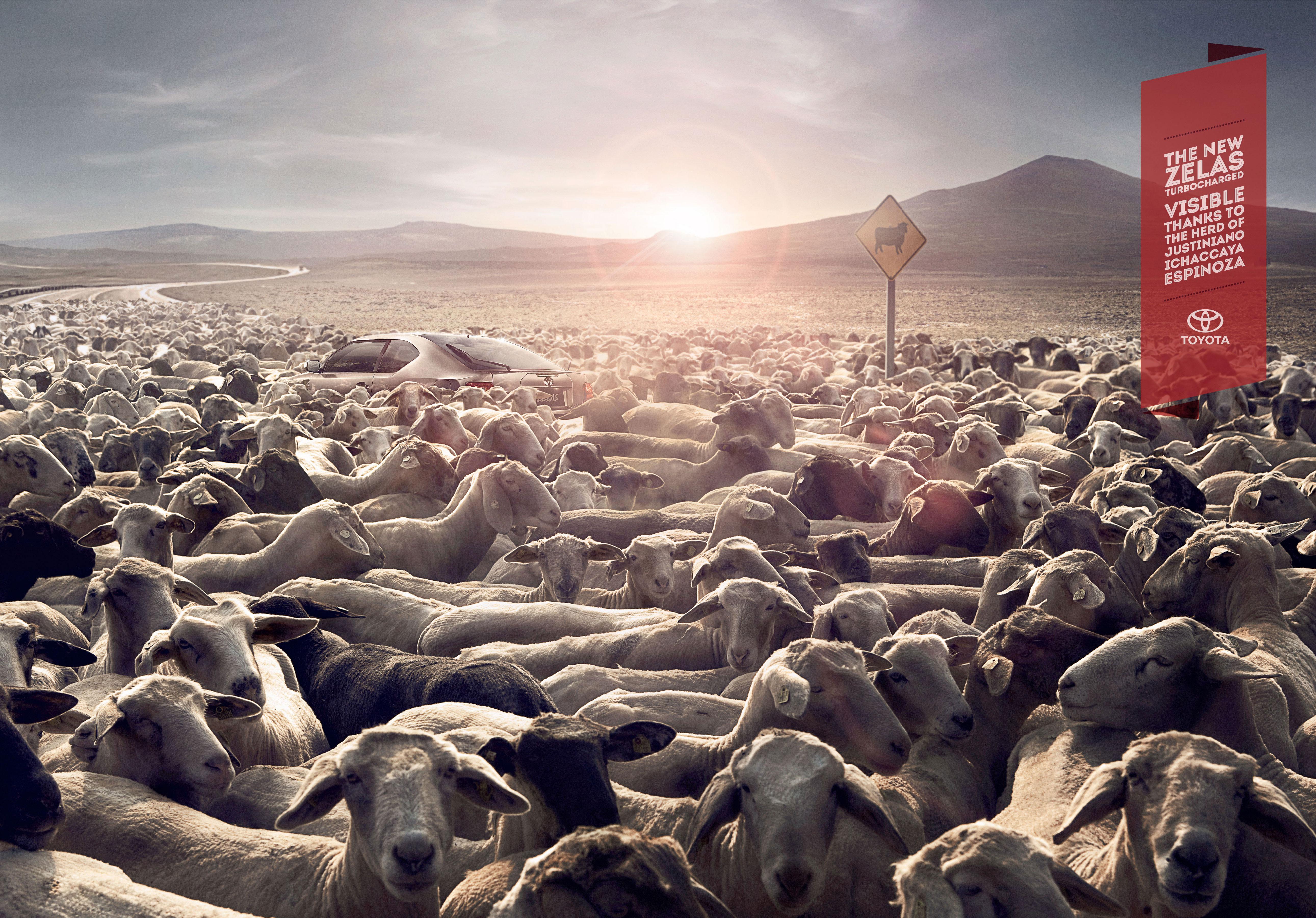 Print ad: Toyota Zelas: Sheep
