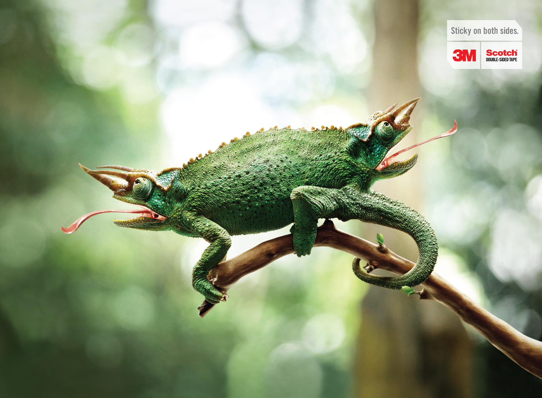 Print Ad 3m Scotch Double Sided Tape Chameleon