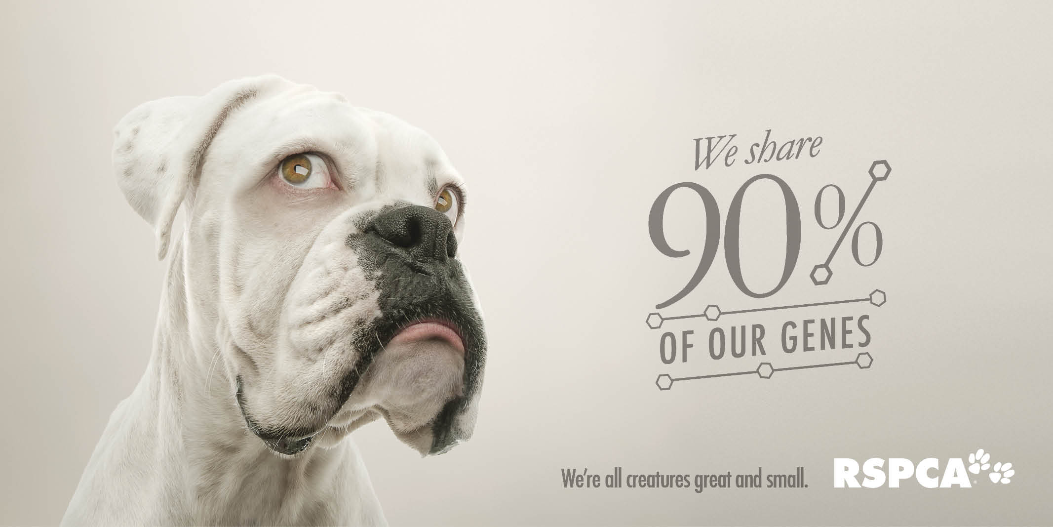 outdoor ad rspca qld we re all creatures great amp small   dog