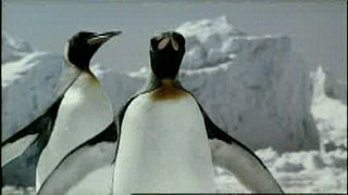 http://www.bestadsontv.com/files/thumbnails/2006-Aug/3217_Guinness_Penguins.jpg