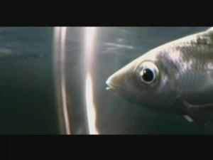 http://bestadsontv.com/files/thumbnails/2007/Jun/7278_fish.jpg