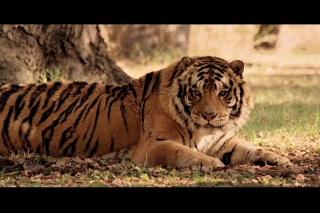 http://bestadsontv.com/files/thumbnails/2008/Jun/14878_MG_Aviva_Cats.jpg