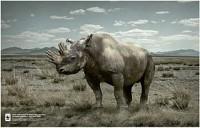 http://www.bestadsontv.com/includes/image.php?image=http%3A%2F%2Fwww.bestadsontv.com%2Ffiles%2Fprint%2F2013%2FJun%2Ftn_54791_Rhino+Horn_Fingernails_s.jpg&width=200