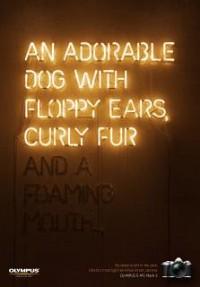 http://www.bestadsontv.com/includes/image.php?image=http%3A%2F%2Fwww.bestadsontv.com%2Ffiles%2Fprint%2F2015%2FDec%2Ftn_76208_dog.jpg&width=200