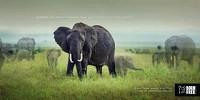 http://www.bestadsontv.com/includes/image.php?image=http%3A%2F%2Fwww.bestadsontv.com%2Ffiles%2Fprint%2F2015%2FFeb%2Ftn_68832_born_free_Elephant_48.jpg&width=200
