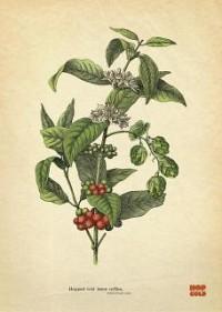 https://www.bestadsontv.com/includes/image.php?image=https%3A%2F%2Fwww.bestadsontv.com%2Ffiles%2Fprint%2F2020%2FJun%2Ftn_116302_1591962764_hop_cold_botanical.jpg&width=200