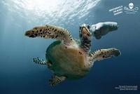 https://www.bestadsontv.com/includes/image.php?image=https%3A%2F%2Fwww.bestadsontv.com%2Ffiles%2Fprint%2F2020%2FJun%2Ftn_116725_1593412270_turtle+Gloves.jpg&width=200