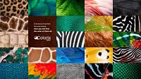 https://www.bestadsontv.com/includes/image.php?image=https%3A%2F%2Fwww.bestadsontv.com%2Ffiles%2Fprint%2F2021%2FApr%2Ftn_125576_1619742391_COLORIX_Animals_Arch.jpg&width=200