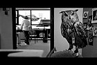 American Express: Animals
