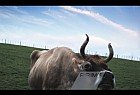 Prime Idents: Cow lick