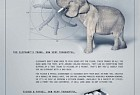 Fisher & Paykel:  Elephant