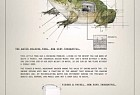 Fisher & Paykel: Frog