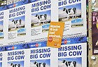 Adelaide Casino: Missing Big Cow