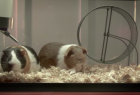 AT&T: Guinea Pig
