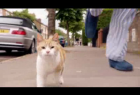 MoneySuperMarket: Running With Cats
