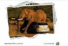 Volkswagen Polo: Elephant Impact Protection As Standard