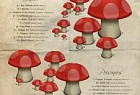 National Geographic Kids Magazine: Mushroom