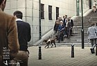 Belgian Centre for Guide Dogs: Steps