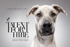K9 FRIENDS: Talent for Hire