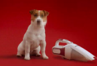 Schmackos: The Terrier & The Dustbuster
