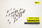 Amnesty International: Freedom of Assembly