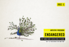 Amnesty International: Artistic Freedom