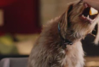 Rover.com: Meet The Dog People