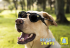 Dog Zen: Reggie Does Snaps