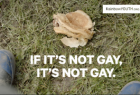 RainbowYOUTH: If It's Not Gay, It's Not Gay