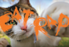 Best Friends Animal Society: The Cat Rap