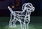Dog Rescue: Light up your home