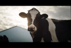 Dairy Farmers of Canada: Caring For Our Cows