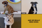 Pedigree: Dogs on Zoom