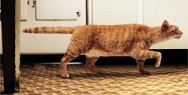 WHISKAS CAT FOOD: POINTER CAT