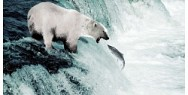 Global Warming Program: Polar Bear