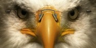 Optics Schilling: Eagle