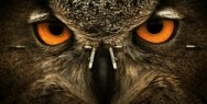 Optics Schilling: Owl