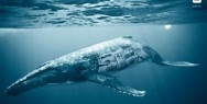 WWF - Biodiversity And Biosafety Awareness: Whale