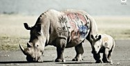 WWF - Biodiversity And Biosafety Awareness: Rhino