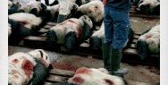 Sea Shepherd Conservation Society: Tsukiji Market